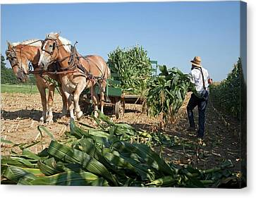Amish Country Canvas Print - Harvest On An Amish Farm by Jim West