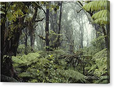 Hawaiian Rainforest Canvas Print by Gregory G. Dimijian, M.D.