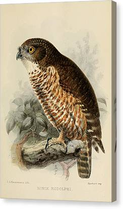 Audubon Canvas Print - Hawk Owl by Dreyer Wildlife Print Collections