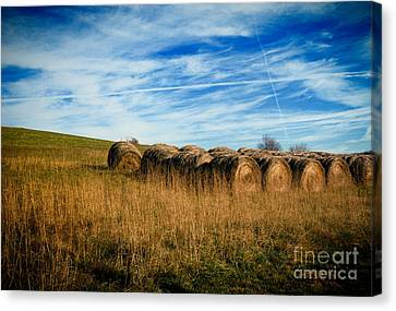 Hay Bales And Contrails Canvas Print by Amy Cicconi