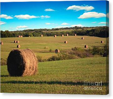 Hay Fields Canvas Print