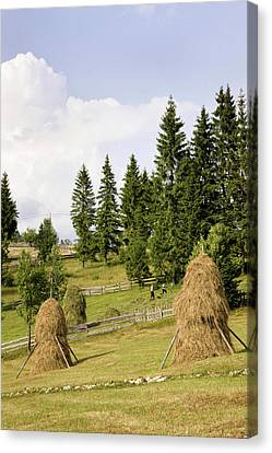 Hay Harvest And Haystack In The Apuseni Canvas Print by Martin Zwick