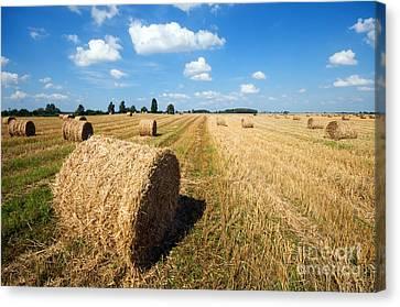 Haystacks In The Field Canvas Print by Michal Bednarek