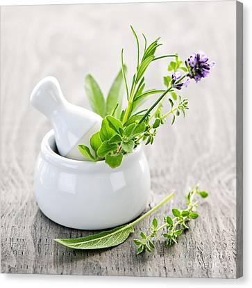 Healing Herbs Canvas Print