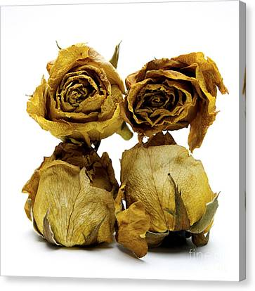 Heap Of Wilted Roses Canvas Print by Bernard Jaubert