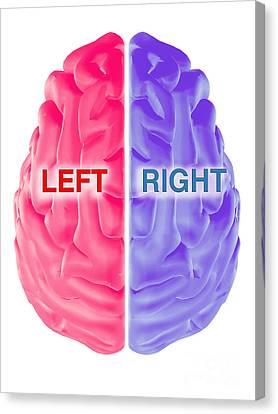 Left Hemisphere Canvas Print - Hemispheres Of The Brain by Scott Camazine