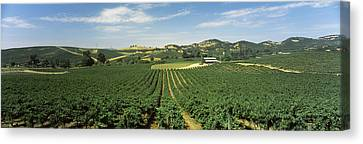 High Angle View Of A Vineyard, Carneros Canvas Print