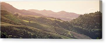 Sonoma County Canvas Print - High Angle View Of A Vineyard by Panoramic Images
