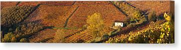 High Angle View Of Vineyards, Alba Canvas Print