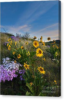 High Desert Spring Canvas Print by Mike  Dawson