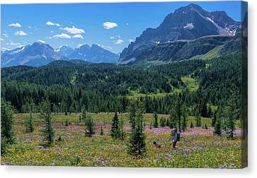 Hiker At Wildflowers Meadow, Monarch Canvas Print