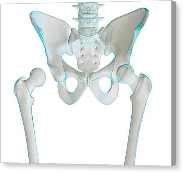 Hip Joint Bones And Anatomy, Artwork Canvas Print by Science Photo Library
