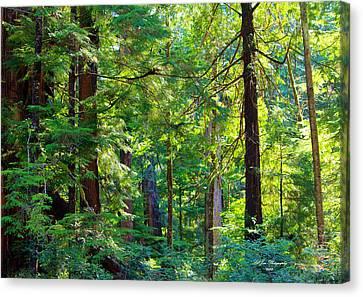Hoh Rain Forest Canvas Print