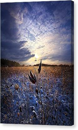 Holding On Canvas Print by Phil Koch