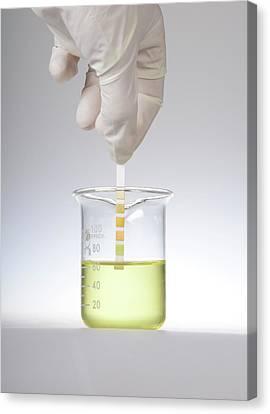 Home Urine Test Canvas Print by Cordelia Molloy