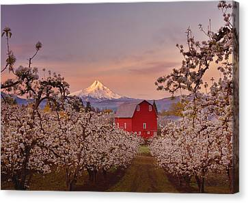 Hood River Sunrise Canvas Print by Darren  White