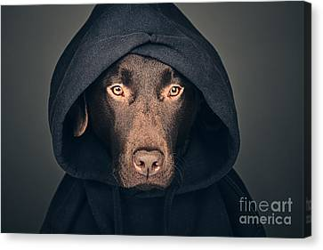 Hoodie Canvas Print - Hooded Dog by Justin Paget