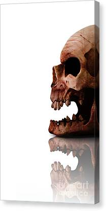 Horror Head Canvas Print by Jorgo Photography - Wall Art Gallery