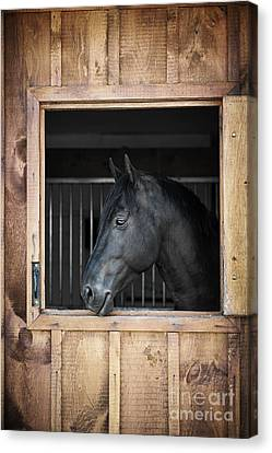 Wooden Building Canvas Print - Horse In Stable by Elena Elisseeva
