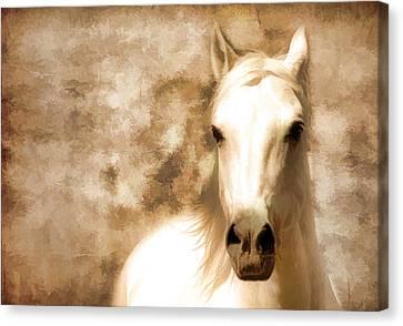 Horse Whisper Canvas Print by Athena Mckinzie