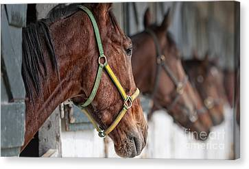 Horse Stable Canvas Print - Horses For Sale by Brian Mollenkopf