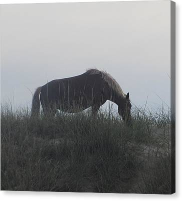 Horses Of Corolla 5 Canvas Print by Cathy Lindsey