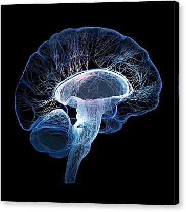 Idea Canvas Print - Human Brain Complexity by Johan Swanepoel