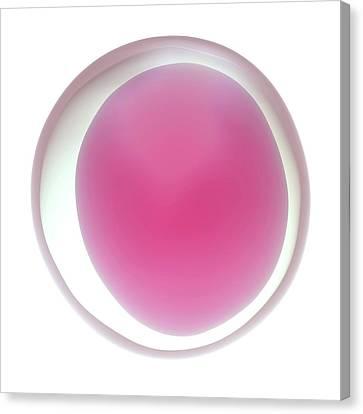 Human Egg Cell Canvas Print by Maurizio De Angelis