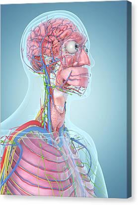 Human Head Canvas Print - Human Head by Sciepro