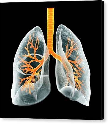 Human Lungs Canvas Print by Sciepro