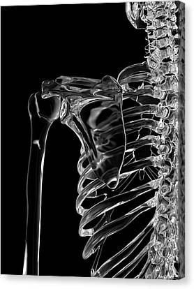 Human Shoulder Joint Canvas Print by Sciepro