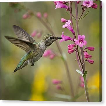 Hummingbird Heaven  Canvas Print by Saija  Lehtonen