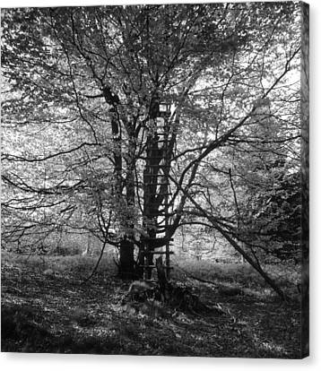 Hunter's Hide In A Beech Tree - Monochrome Canvas Print by Ulrich Kunst And Bettina Scheidulin