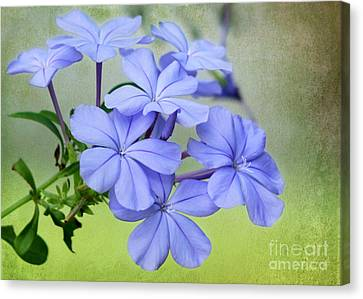 Florida Flowers Canvas Print - I Love Blue Flowers by Sabrina L Ryan