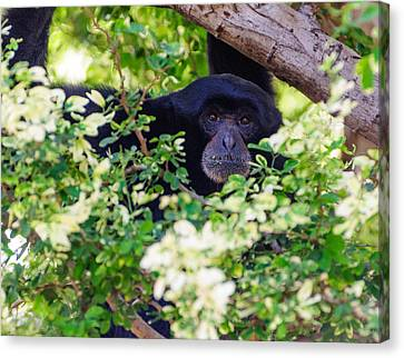 I See You Canvas Print by John Johnson
