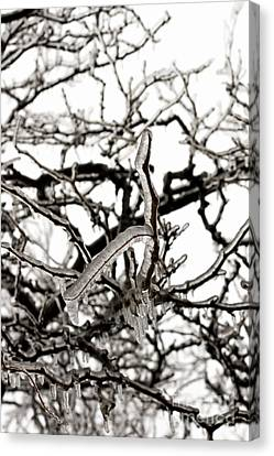 Ice On Branches Canvas Print