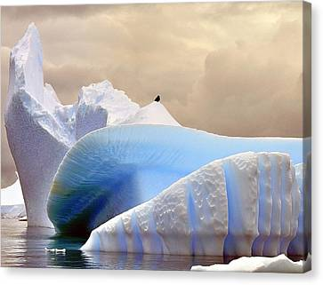 Iceberg Alley Canvas Print by Tony Beck