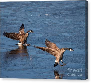 Canvas Print featuring the photograph Icy Landing by Dale Nelson