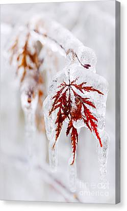Icy Winter Leaf Canvas Print by Elena Elisseeva