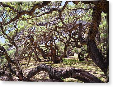 In The Depth Of Enchanting Forest Canvas Print by Jenny Rainbow