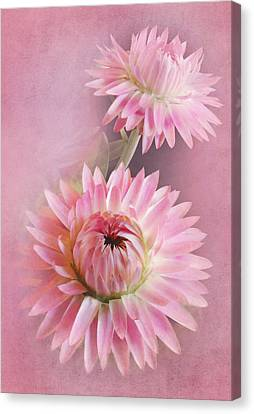 In The Pink Canvas Print by David and Carol Kelly