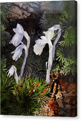 Canvas Print - Indian Pipes by Enola McClincey