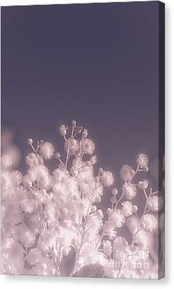 Infrared Nature Bloom Canvas Print