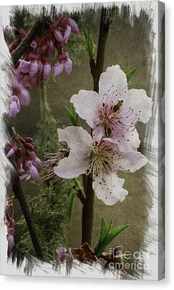 Canvas Print featuring the photograph Into Spring Abstract by Lori Mellen-Pagliaro