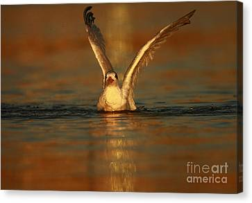 Canvas Print featuring the photograph Into The Light by John F Tsumas