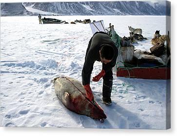 Inuit Hunter Butchering A Seal Canvas Print