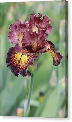 Iris Flower Canvas Print