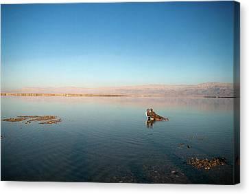 Jordan Canvas Print - Israel, Dead Sea by David Noyes