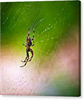 Itsy Bitsy Spider My Ass  Canvas Print by Steve Harrington