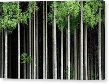 Japan, Nara Prefecture, Soni Plateau Canvas Print by Jaynes Gallery